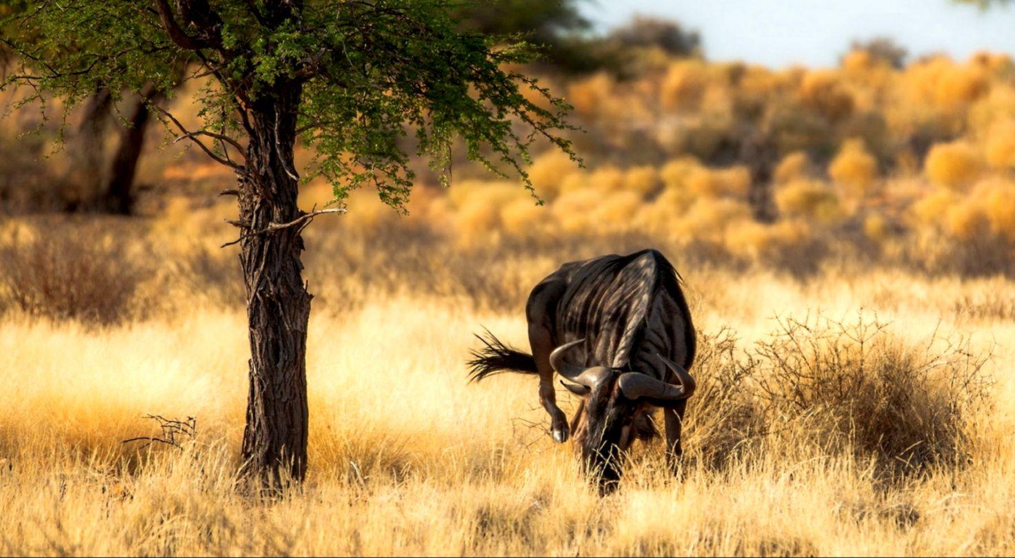 Antelopes Nature Africa Hd Wallpaper Hd Wallpapers