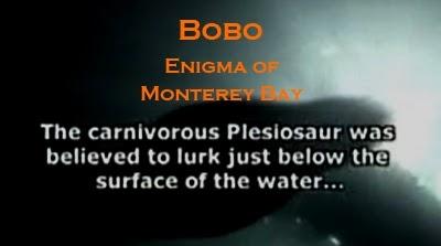 Bobo: Enigma of Monterey Bay