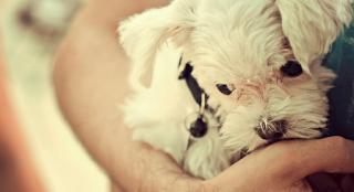 Κι οι σκυλογονείς, γονείς είμαστε