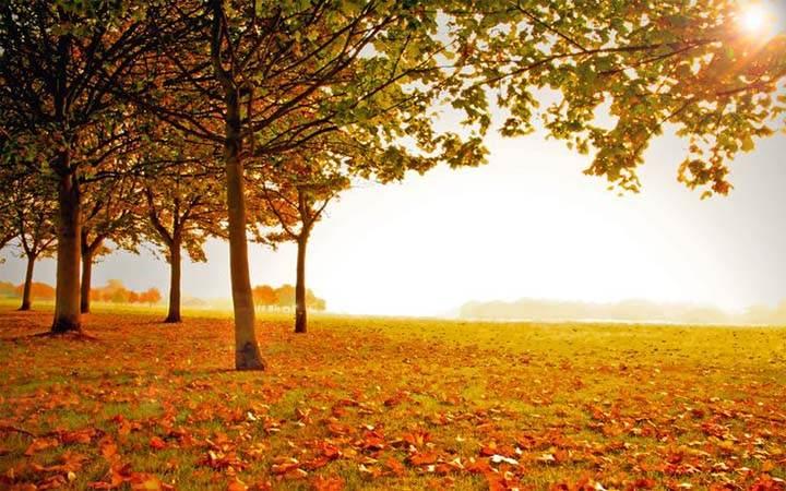 sonbaharın hüzün dolu resimleri