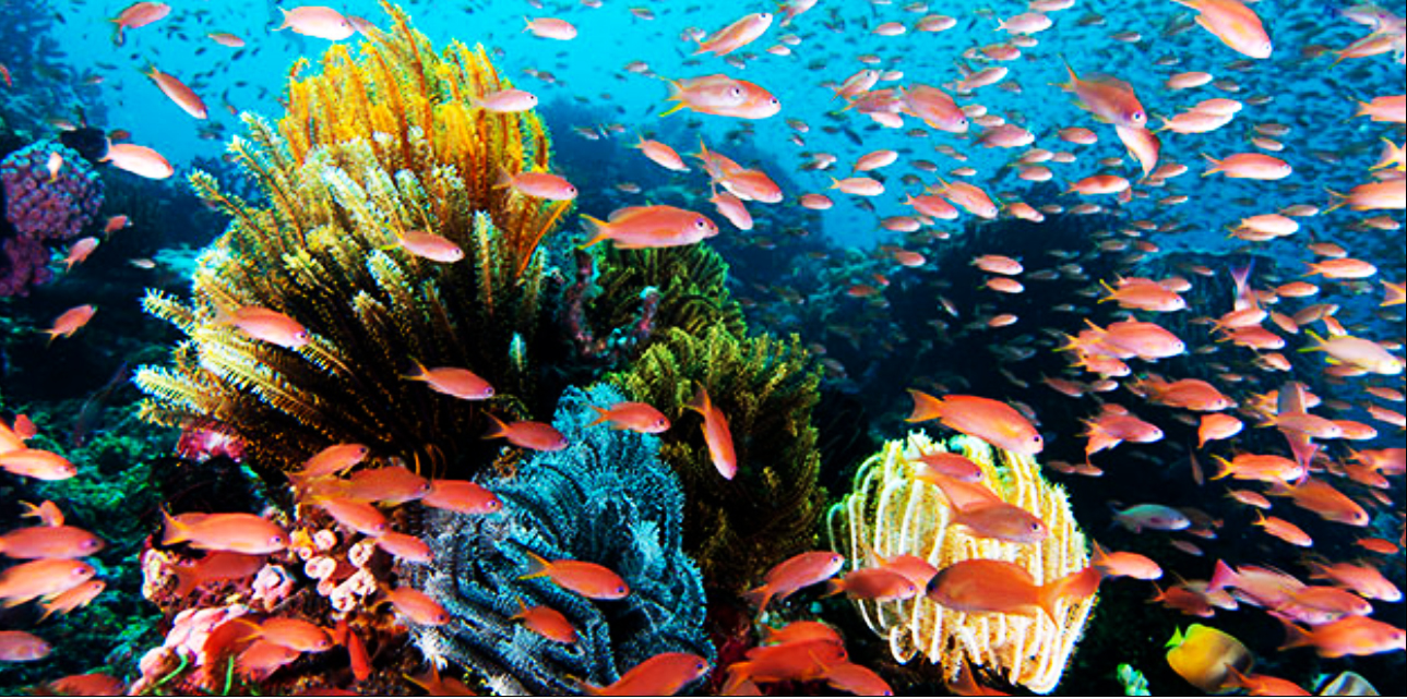 The Beauty Landscape of Indonesia: The Best Dive Spots in ...  The Beauty Land...