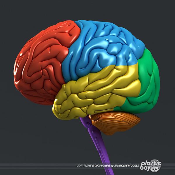 3d Gun Image: 3d Brain