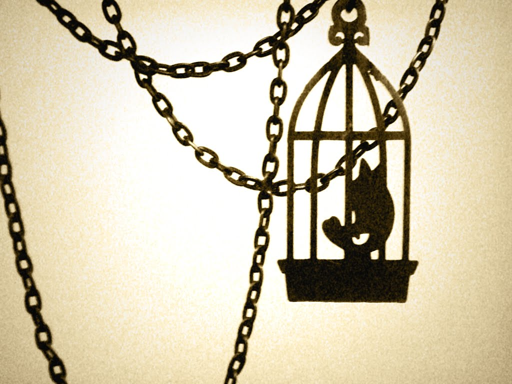 of poetry the caged bird the caged bird i know why the caged bird sings