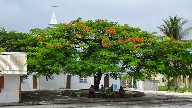Big tree for church participants