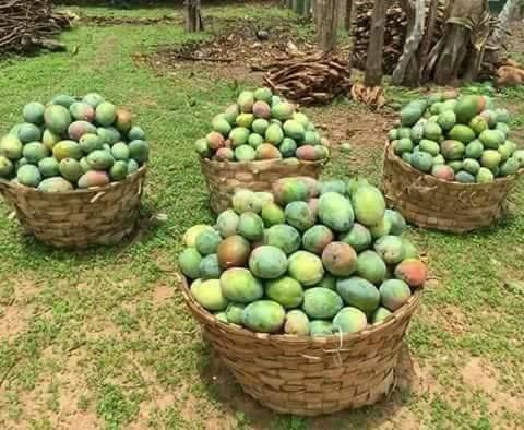 منتجات جبل مره صور جميلة من منطقة جبل مرة غرب السودان