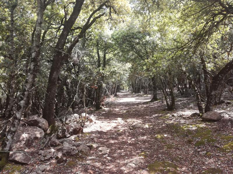 GR 221, percorso di trekking a Maiorca