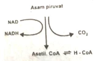 Contoh Soal UTS Biologi Kelas XII Semester 1 Beserta Jawaban - By Pengertians