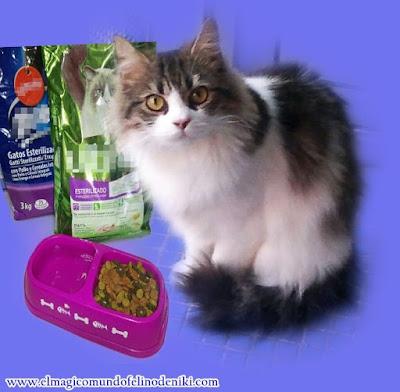 gato-no-quiere-comer-causas-soluciones