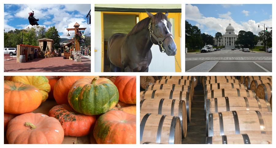 bourbons et chevaux sud des USA