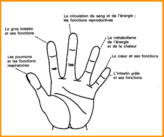 eclaircir les phalanges des doigts
