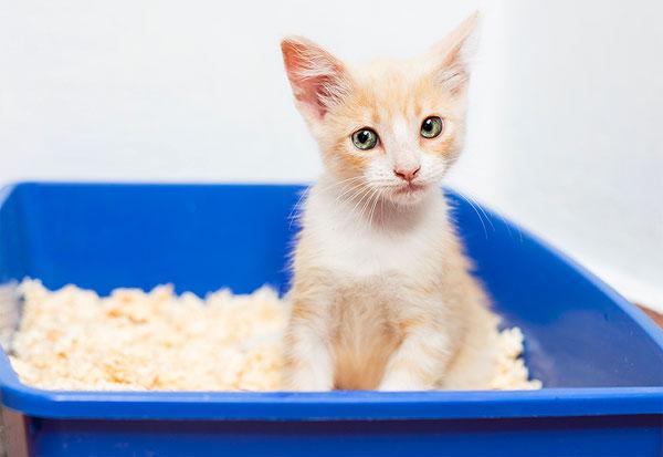 Hilangkan Bau Laptop dengan Menggunakan Pasir Kotoran Kucing