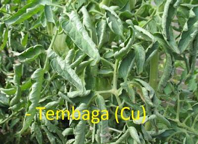 kekurangan kelebihan tembaga (Cu) pada tanaman