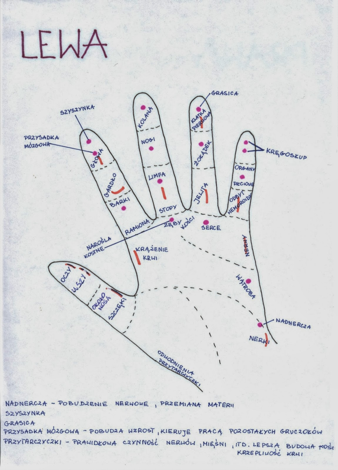 aba49a39111400 Ból w pewnym momencie przeniósł się na prawy kciuk, tam też został  pogoniony i zniknął na kilka dni zupełnie. W Wigilię pojawiły się od rana  objawy infekcji ...