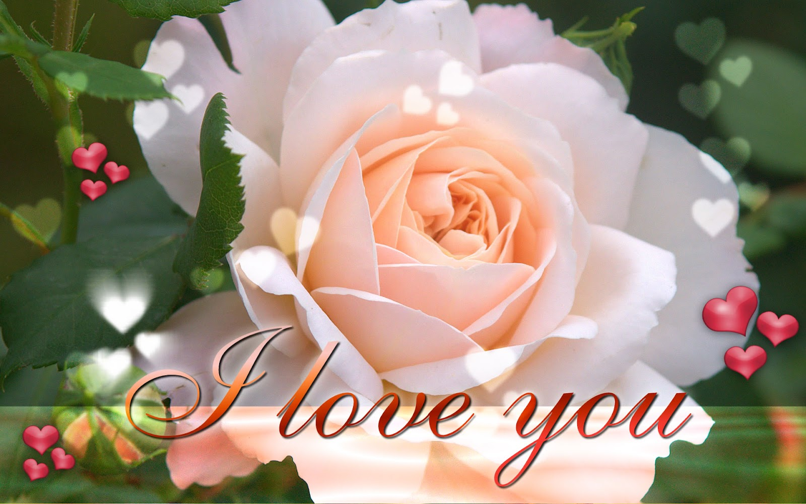 Pictures World: Beautiful Love wallpaper