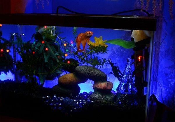 Life, Death, and Betta Fish Christmas Ornaments By bettafish.com