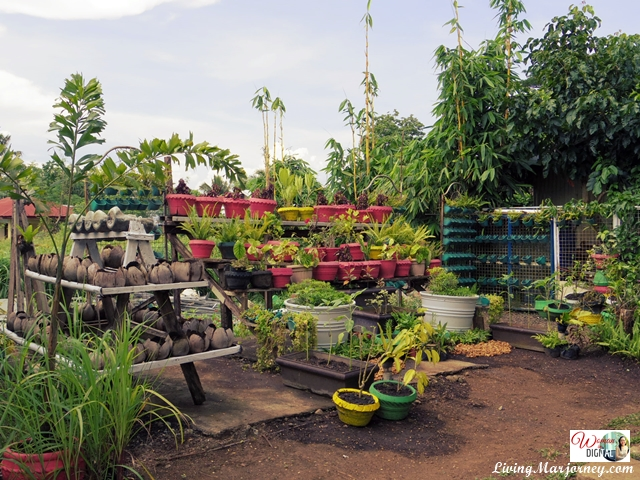 Cherry-Lo-Sonrisa-Farm