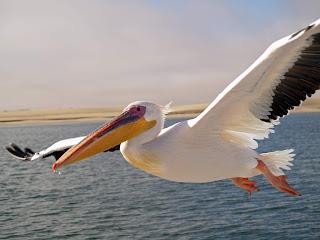 انواع الطيور التي تؤكل