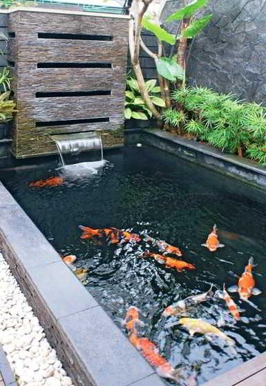 Desain Kolam Ikan Hias Sederhana