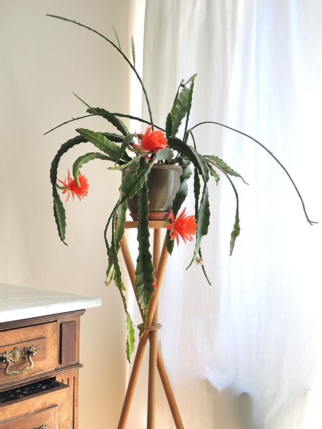 de cactus van Tante Rita