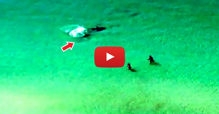 Huge Shark scares Tourists, causing them to run back to the shore