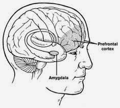 the progress focused approach strengthening your prefrontal cortex