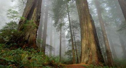 Hak Memungut Hasil Hutan