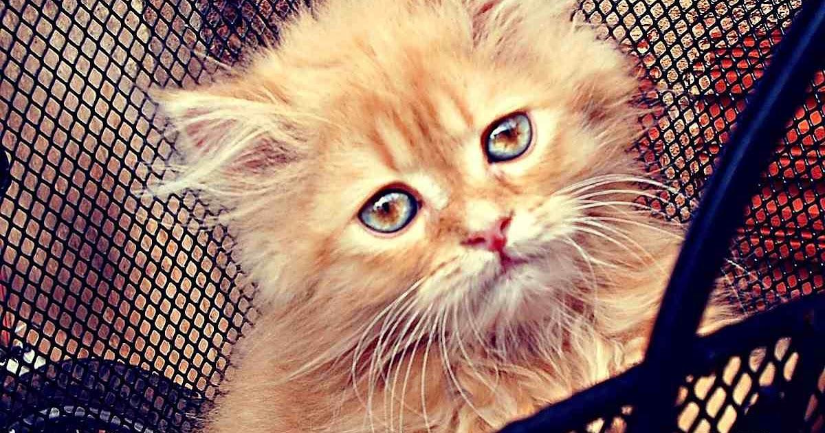 Gambar Kucing Galau godean.web.id