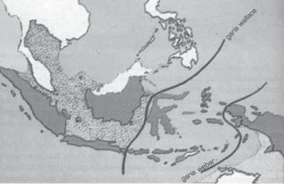 Pembagian atau Persebaran Flora dan Fauna di Indonesia Terlengkap