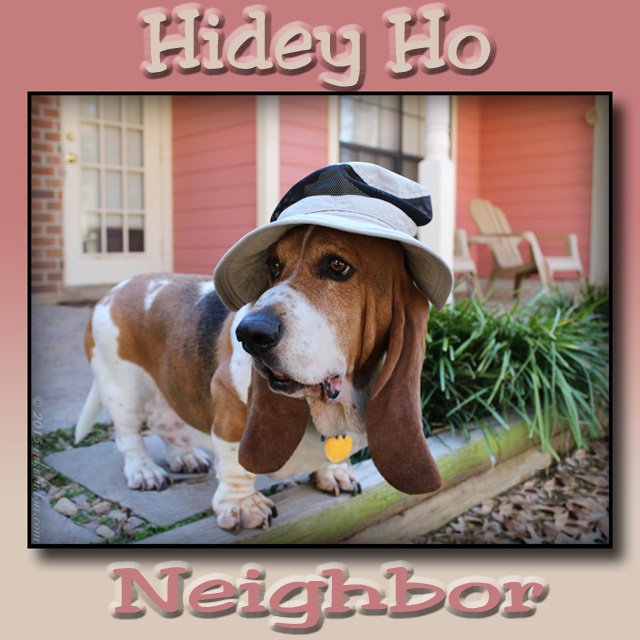 "Bentley Basset wearing gardening hat with caption, ""Hidey ho neighbor"""