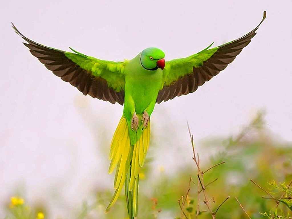 beautiful green parrots wallpapers - Wallpapers Free - photo#42