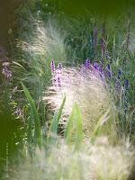 Gräser für ein mediterranes Beet