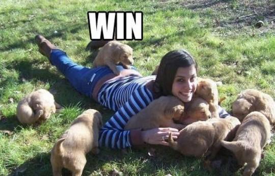puppy win