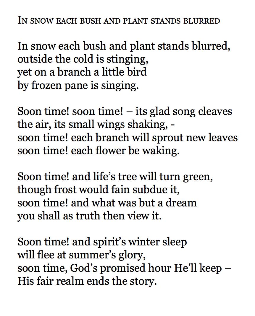 i sne står urt og busk i skjul tekst