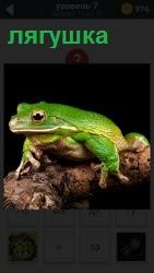 На толстой ветке дерева сидит ярко зеленая лягушка с выпученными глазами