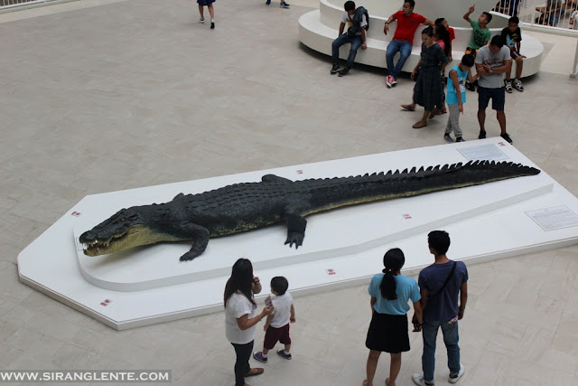 largest saltwater crocodile 2020