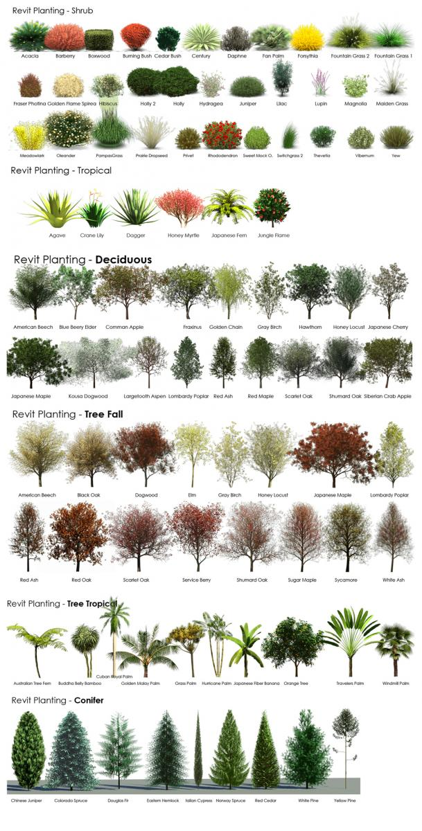 Revit RPC Plant and Tree Reference Guide | TheRevitKid com
