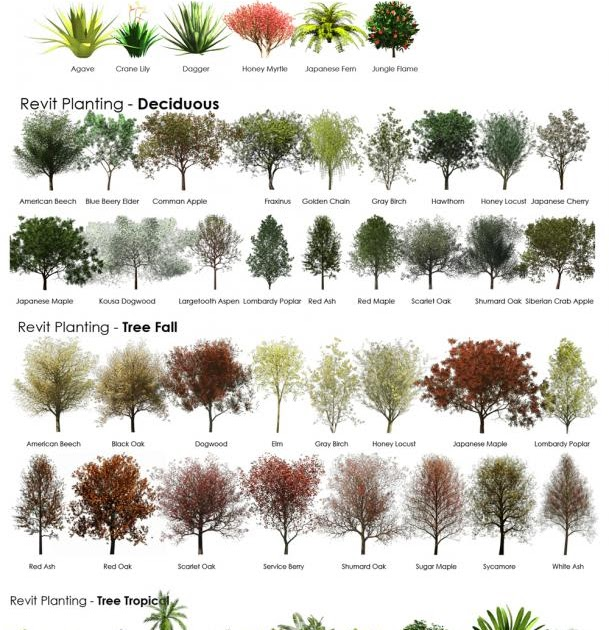 Revit Rpc Plant And Tree Reference Guide Therevitkid