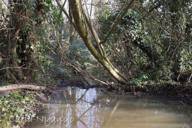 river sherbourne