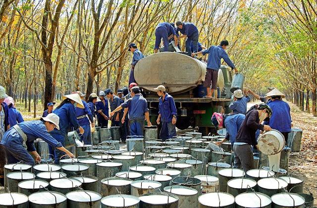 Đấu giá Cổ phần Tập đoàn Công nghiệp Cao su Việt Nam