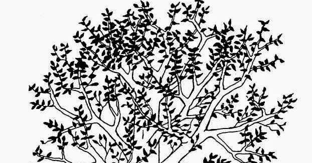 Berita Terbaru Dan Profil Artis Terkini Penjelasan Cara Menggambar Pohon Yang Benar Dan Tepat Agar Lulus Psikotest