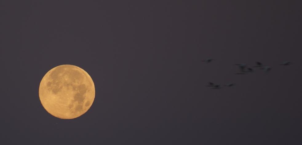 mars moon same size as - photo #19