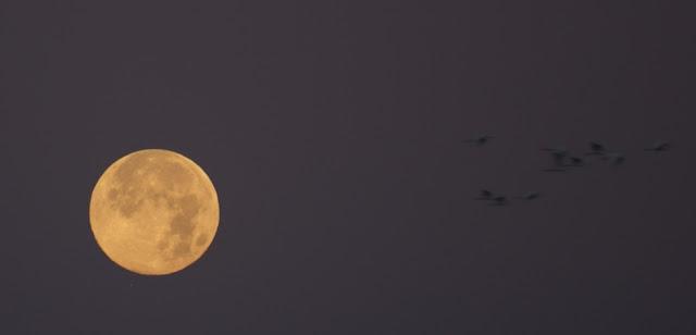 mars moon same size as - photo #8