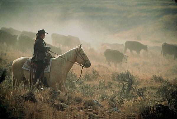 imagem de um homem lidando com gado