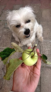 vegetarian diet for a dog