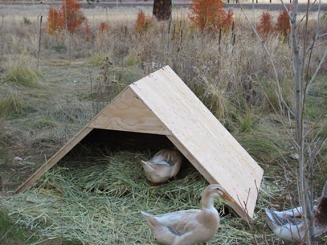 cold weather tips for winter duck care fresh eggs daily ForWinter Duck House