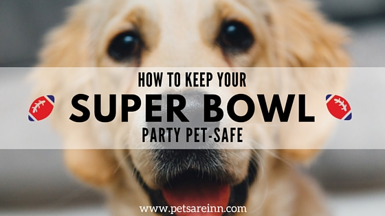 Super Bowl Pet Safety