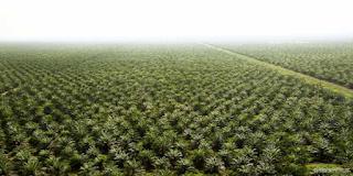 kesesuaian lahan kelapa sawit