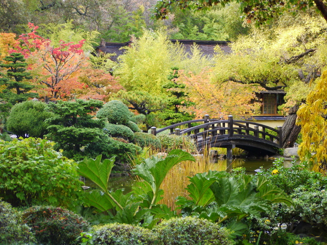 Frog Mom Hakone Gardens Where Bamboo Forests Meet Maple Gardens