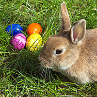 ► Easter Bunny Images: Free & High Definition Easter Bunny Images 2017