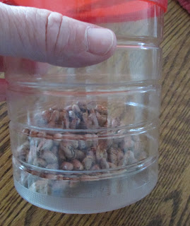 Seeds in a canister